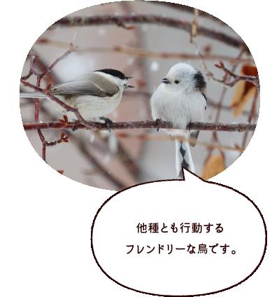 他種とも行動するフレンドリーな鳥です。