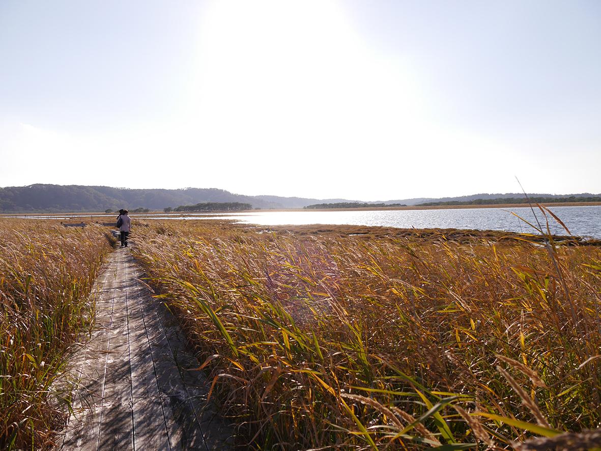 奥琵琶瀬野鳥公園